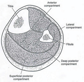 bone-cross-section